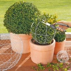 Tualatin Landscaping and Shrub Care Boxwood Landscaping, Boxwood Garden, Landscaping Around Trees, Cottage Garden Plants, Home Vegetable Garden, Outdoor Landscaping, Topiary Plants, Topiary Garden, Garden Planters