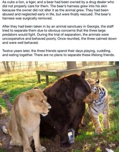 This is awesome. I want to go to this animal sanctuary just to see these 3 together.