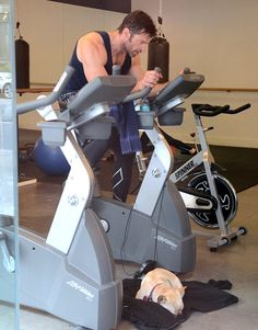 oh my goodness. Hugh Jackman takes his Frenchie to the gym with him <3!!