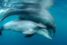 Cool Photos, Amazing Photos, Under The Sea, Dolphins, Whales, Child, Babies, Board, Sweet
