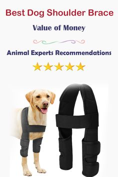 It is difficult for dog owner when his lovely friend get shoulder injury. Because it causes the problem of movement and pain in shoulders. Best Dog Shoulder braces are designed to reduce the pain and helps dog for mobilization. . #MookieTheDachshund #Here #CloseUp #HeavyExposure #DogShoulder #dachshund #dogshoulder #thereandbackagain #england #pacificnorthwest #flannagan #dog #dogs #canine #canines #doginjury #dogleg #dogleginjury #dogmedicine #doghealth #healthydog #caninehealth… Dog Braces, Better Braces, Samurai Wallpaper, Male To Female Transition, Free Facebook Likes, Every Dog Breed, Dog Anatomy, Shoulder Brace, Dog Leg