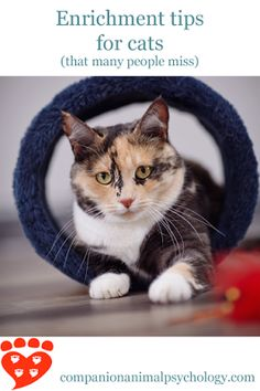 Enrichment tips for cats (that many people miss) http://www.companionanimalpsychology.com/2016/04/enrichment-tips-for-cats-that-many.html