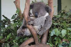 "http://www.sydney-migration.de/visum_australien.html   visum australien - ""No Worries, Mate"""