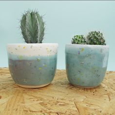 Little Cacti Planters (Turquoise and white) - Natalie Strachan Ceramics