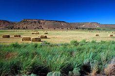 Hay bales and rimrock along Highway 380, also known as Paulina Highway. (Photo No. croDA0178)