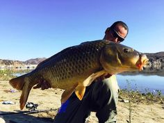 A NEW LAKE-RECORD carp was landed at Irvine Lake this week by Luis Montes of Orange, who was using a European bait called vanilla boilies at the western shoreline to entice the 37-pound fish. Montes also added a 26 pounder for his day's work. Both fish were released.