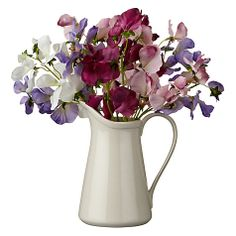 Artificial roses and eucalyptus a jug of gorgeousness details buy sweet peas in white jug online at johnlewis mightylinksfo
