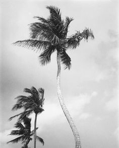 Palm tree prints & a fascination with surf culture