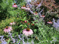 Květiny a motýl
