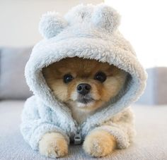 17 Tiny Pets That Will Soften Your Cold Heart Very Cute Dogs, Super Cute Puppies, Baby Animals Super Cute, Cute Baby Dogs, Cute Little Puppies, Cute Dogs And Puppies, Cute Little Animals, Cute Funny Animals, Cute Cats