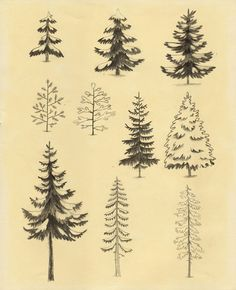Pines and Spruces Art Print by Chuck Groenink #art #drawing