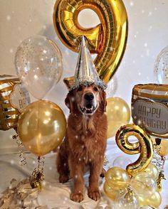 Dog Birthday Photoshoot Puppy Party New Ideas Dog First Birthday, Puppy Birthday Parties, Puppy Party, Animal Birthday, 10th Birthday, Diy Pour Chien, Negra Li, Sweet Boys, Happy Puppy