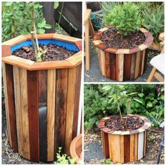 How To Make Stylish And Low Cost Planters | Make stylish and low cost planters using 55 gallon plastic drums with the sides covered with new or scrap wood.