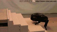 aww so cute!! a puppy robodog/frog thingy, aww :) www.aerogelgraphene.com
