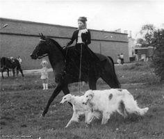 borzois #dogs #animal #borzoi