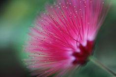 Pink Needle Flower by Cristiane Crozat on 500px