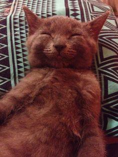 Such a happy kitten Smiling Animals, Happy Animals, Funny Animals, Cute Animals, I Love Cats, Cute Cats, Funny Cats, Crazy Cat Lady, Crazy Cats