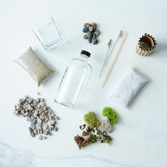 DIY Apothecary Moss Terrarium Kit on Provisions by Food52