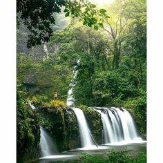 Nandroya Falls circuit is a beautiful 3.5km return track through the Wooroonooran National Park.  Tks to IG@mitch.cox #athertontablelands