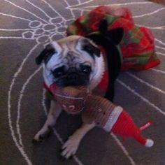 Merry Christmas! #pug #furbaby