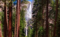 Download wallpapers Yosemite waterfall, rock, forest, redwood, rocks, Yosemite National Park, California, United States