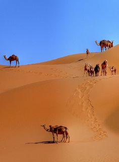 Sand dunes of the Sahara, Northern Africa - Cheap hotels in oran algeria http://holipal.com/hotels/