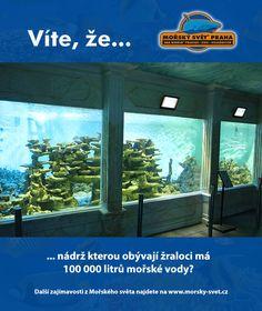 Víte, že... #morskysvet #morskysvetpraha #seaworld #seaworldprague #praha #prague #touristprague #zoo #viteze #ryby #zraloci #koraly #hledasenemo Praha, Sea World, Aquarium, Goldfish Bowl, Aquarium Fish Tank, Aquarius, Fish Tank