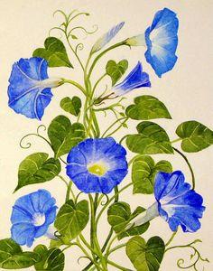 Blue Morning Glories Original