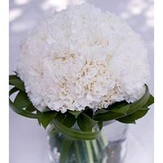 White carnations wedding bouquet and coordinating centerpieces for the table. Fresh carnation wedding bouquets are designed for you and shipped directly from the grower to your door! Carnation Wedding Bouquet, Carnation Centerpieces, Wedding Centerpieces, Wedding Bouquets, Wedding Flowers, Wedding Decorations, Wedding Ideas, White Centerpiece, Jar Centerpieces