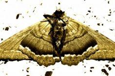 45 Ideas De Fuera Bichos Trucos Insecticidas Naturales Trucos De Limpieza