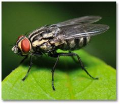 Nothing ruins a meal like a fly. Even just one of the pesky pests can ruin appetites and send family pets, scared by the constant swatting, into hiding. Take