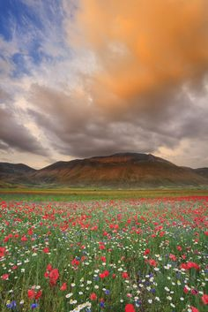 Castelluccio, Umbria.This small hilltop town located in the middle of Monti Sibillini National Park might be off the beaten path for casual travelers to Italy, but it's worth a detour to see the wildflowers bloom in early summer.