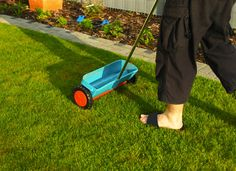 7 Remedies to Rescue a Dying Lawn