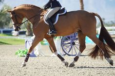 The most important role of equestrian clothing is for security Although horses can be trained they can be unforeseeable when provoked. Riders are susceptible while riding and handling horses, espec… Pretty Horses, Horse Love, Beautiful Horses, Hunter Under Saddle, Hunter Horse, Horse Riding Clothes, Riding Gear, Cute Ponies, Chestnut Horse