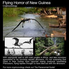 """Flying Horror of New Guinea - Cryptozoology - This remote and unexplored volcanic region is often referred to as the """"Lost World"""", and new species of animals are being found on the island regularly. Lake Monsters, Myths & Monsters, Weird Creatures, Mythical Creatures, Paranormal, Mysteries Of The World, Unexplained Mysteries, Unexplained Phenomena, Creepy Stories"""