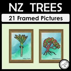 New Zealand Trees School Resources, Classroom Resources, Teaching Resources, Framed Pictures, Kiwiana, Cultural Identity, Spelling Words, Primary School, Teaching Kids
