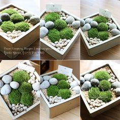 Moss Terrarium, Garden Terrarium, Terrariums, Garden Tree House, Garden Trees, Miniature Zen Garden, Fairy Garden Doors, Micro Garden, Crochet Tree