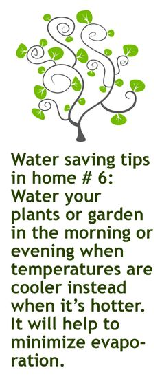 February 3rd. 2013 Green idea #34: Water your plants or garden in the morning or evening when temperatures are cooler instead when it's hotter. It will help to minimize evaporation.