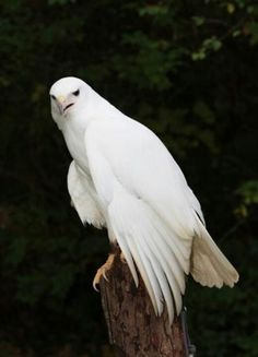 White Hawk- My daughter's real name....