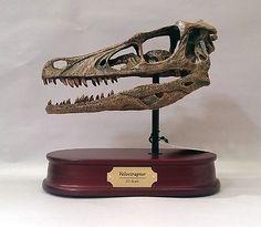 Velociraptor-Dinosaur-Skull-Replica-1-1-Scale
