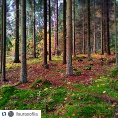Repost from @llaurasofiia a forest in Finland where the mind is at ease. - - - Post photos of where on this globe you have felt at home and tag with @globecalledhome #globecalledhome! I will regram photos from my followers during November.  #finnishforest #finnishnature #suomiretki #suomi #finland #metsä #forest #repost #travel #matka #reissu (via Instagram)