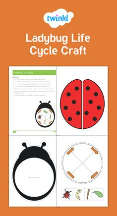 This is a fun craft that teaches children about the life cycle of a ladybug. Cut out the ladybug pieces and glue together to create a beautiful life cycle display. A great hands-on activity to assess student understanding of the life cycle of a ladybug.