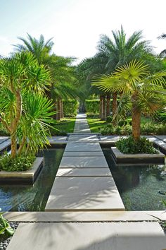 Tropical Walkway With Organized Rows of Bright Palm Trees and Concrete Tile Path Leading Over Yard and Shallow Pond Tropical Garden Design, Tropical Landscaping, Garden Landscape Design, Pond Design, Backyard Landscaping, Landscaping Ideas, Cold Hardy Palm Trees, Walkway, Beautiful Gardens