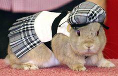 school-girl-rabbit-costume