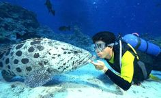 Snorkeling at Hurghada, Hurghada Excursions http://www.shaspo.com/hurghada-excursions-and-day-tours-egypt