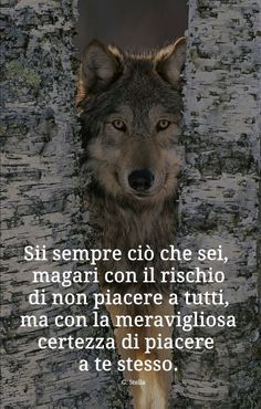 ...io non volevo questo....e non lo voglio...anzi mi da' la nausea...ma non vedo altra strada....attorno è buio. Words Quotes, Wise Words, Positive Quotes, Motivational Quotes, Italian Quotes, Quotes About Everything, She Wolf, Beautiful Wolves, Love Your Life