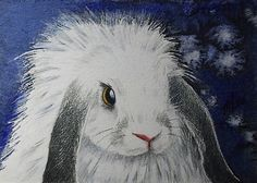Lop Eared Bunny Rabbit Art by Melody Lea Lamb by MelodyLeaLamb (Art & Collectibles, Prints, Giclee, animal art, nature, bunny, rabbit, realistic, miniature art, melody lamb, melody lea lamb, aceo, colored pencil art, lop ear bunny, blue, white bunny)
