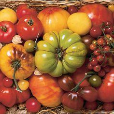 I Love Tomatoes.