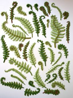 Edible Sugar Ferns & Fiddle Heads 60 assorted / as seen in the Bride's Guide-Martha Stewart Weddings and Unruly Things. $300.00, via Etsy.