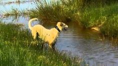 you tube fife and edinburgh dog foods - YouTube